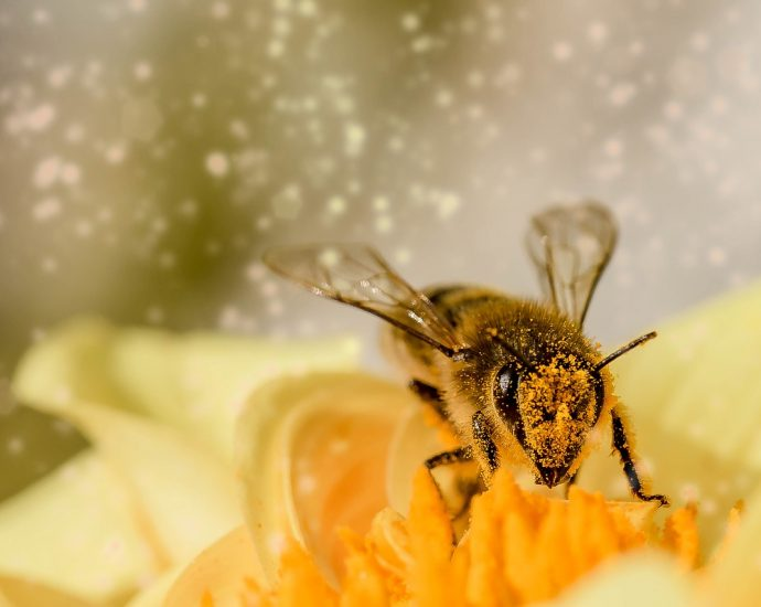 Pyłek w dobrej cenie