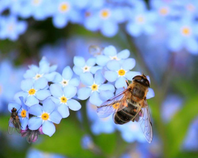 Oferta pyłku pszczelego